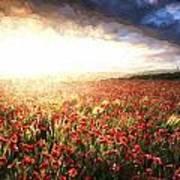 Cezanne Style Digital Painting Stunning Poppy Field Landscape Under Summer Sunset Sky Poster