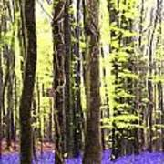 Cezanne Style Digital Painting Vibrant Bluebell Forest Landscape Poster