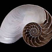 Chambered Nautilus Cross-section Poster