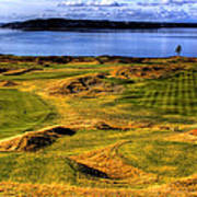Chambers Bay Lone Tree Poster by David Patterson