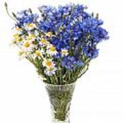 White Camomile And Blue Cornflower In Glass Vase  Poster