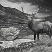 Charcoal Drawing Image Red Deer Stag In Moody Dramatic Mountain Sunset Landscape Poster