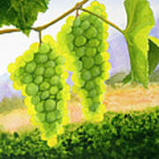 Chardonnay Grapes Poster by Mike Robles