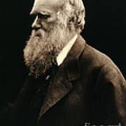 Charles Darwin By Julia Margaret Poster
