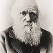 Charles Darwin Poster by English School