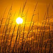 Charleston Beach Sunrise Poster