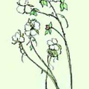 Charming Cotton Bolls Poster