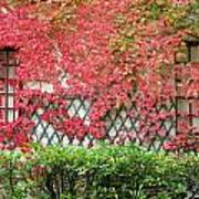 Chateau Chenonceau Vines On Wall Image One Poster