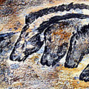 Chauvet Cave Auroch And Horses Poster
