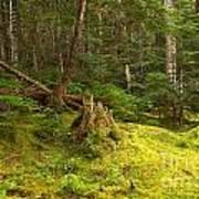 Cheakamus Rainforest Floor Poster