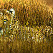 Cheetah - In The Wild Grass Poster