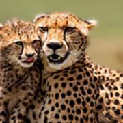 Cheetah Mother And Cub In Masai Mara Poster