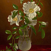 Cherokee Roses In A Glass Vase C1883-1888 Poster