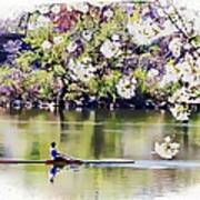 Cherry Blossom Rower Poster