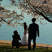 Cherry Blossoms 2013 - 054 Poster