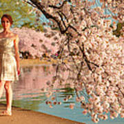 Cherry Blossoms 2013 - 080 Poster