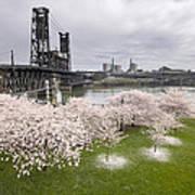 Cherry Blossoms Along Willamette River Poster