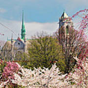 Cherry Blossoms And The Sacred Heart Poster