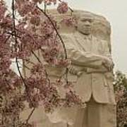 Cherry Blossoms At The Martin Luther King Jr Memorial Poster