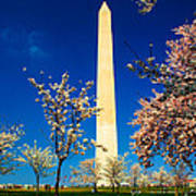 Cherry Blossoms At The Monument Poster