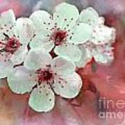 Apple Blossoms In Soft Pink - Digital Paint Poster