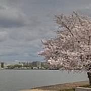 Cherry Blossoms - Washington Dc - 011362 Poster by DC Photographer