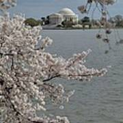 Cherry Blossoms With Jefferson Memorial - Washington Dc - 011321 Poster by DC Photographer