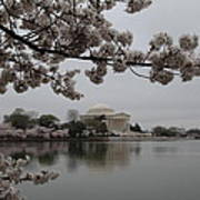 Cherry Blossoms With Jefferson Memorial - Washington Dc - 011343 Poster