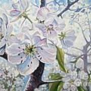 Cherry In Blossom Poster by Andrei Attila Mezei