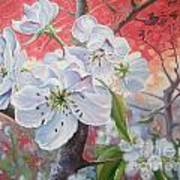 Cherry In Blossom Red Poster by Andrei Attila Mezei