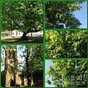Chestnut Trees At Christchurch Poster