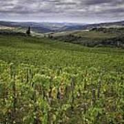 Chianti Region Of Tuscany Poster