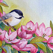 Chickadee And Crabapple Flowers Poster