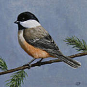 Chickadee Charm Poster by Crista Forest