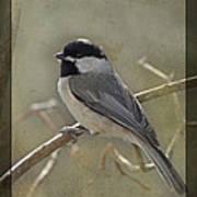 Chickadee Early Bird II Poster