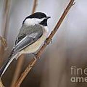 Chickadee Pictures 316 Poster