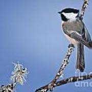 Chickadee Pictures 409 Poster