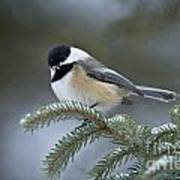 Chickadee Pictures 521 Poster