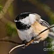 Chickadee Pictures 561 Poster