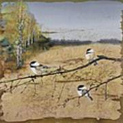 Chickadees And A Row Of Birch Trees Poster