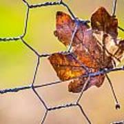 Chicken Wire Leaf. Poster