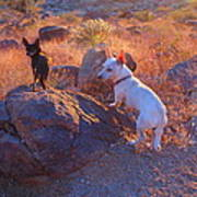 Chico And Paco The Mountain Dogs Poster