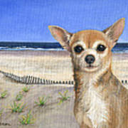 Chihuahua At Sea Isle City New Jersey Poster by Peggy Dreher