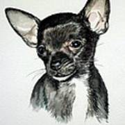 Chihuahua Black 2 Poster