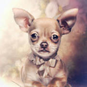 Chihuahua Puppy Poster