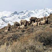 Chimney Rock Rams Poster