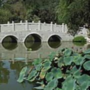 Chinese Garden Scene Poster
