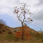 Chino Hills Tree Poster