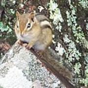 Chipmunk On A Log Poster