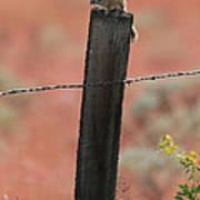 Chipmunk On Fence Post Poster